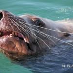 Sea Lion Visit 4 15 05
