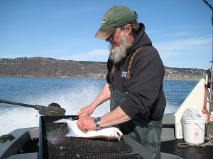 PETE FILLETING A HALIBUT IN APRIL